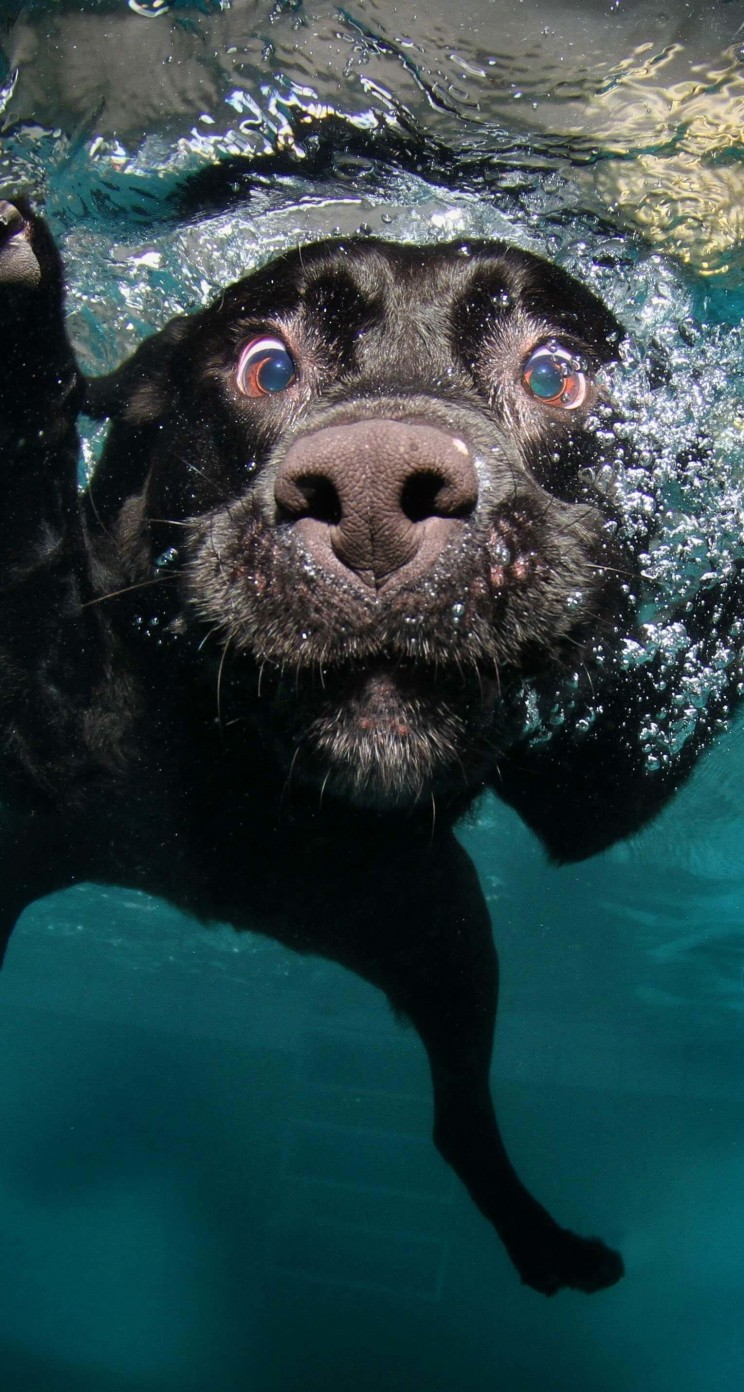Underwater Dog Wallpaper for Apple iPhone 5 / 5s
