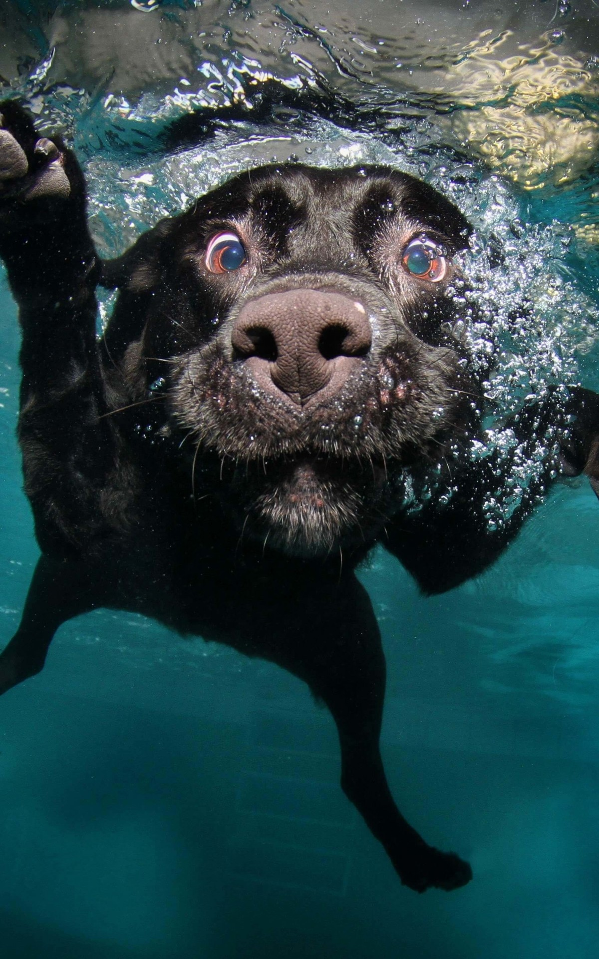 Underwater Dog Wallpaper for Amazon Kindle Fire HDX