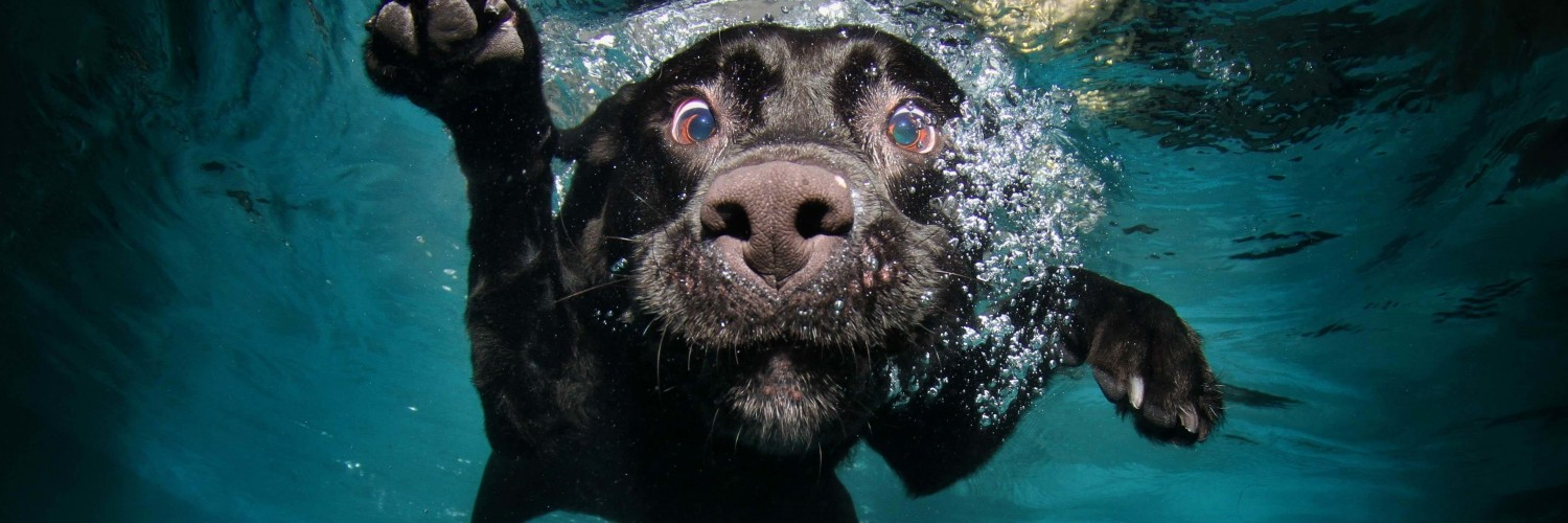 Underwater Dog Wallpaper for Social Media Twitter Header
